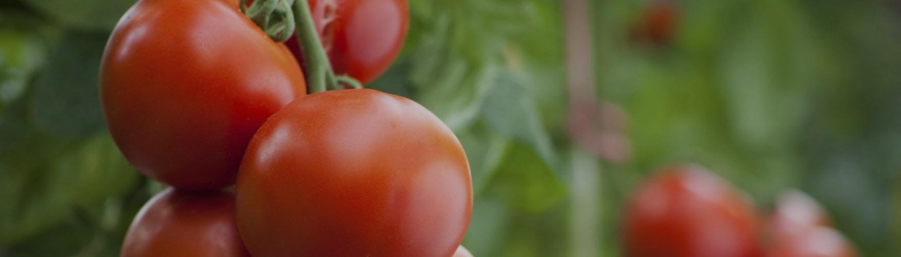 Soluções para Agricultura